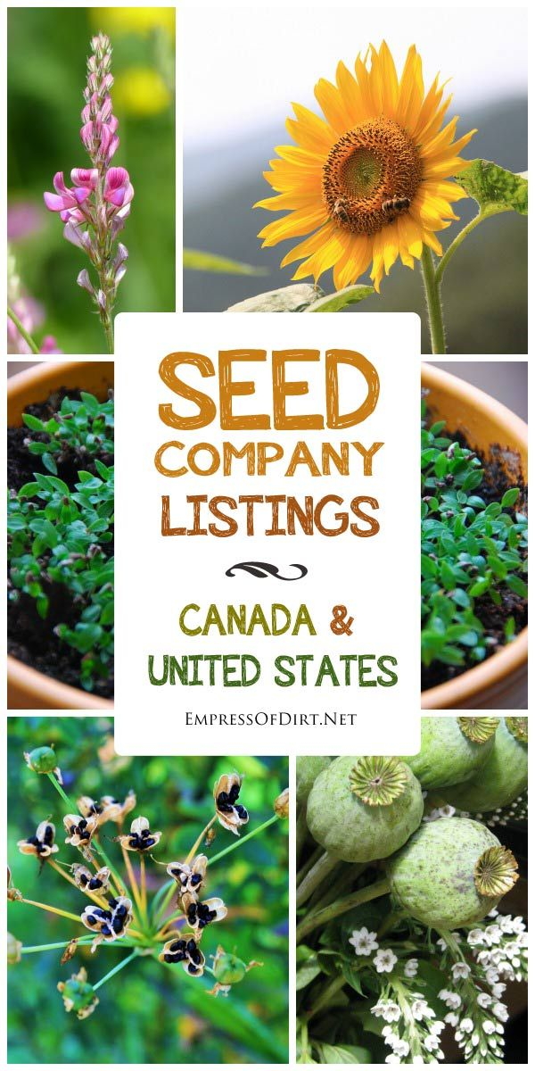 United States Seed Companies Garden seeds, Organic seeds