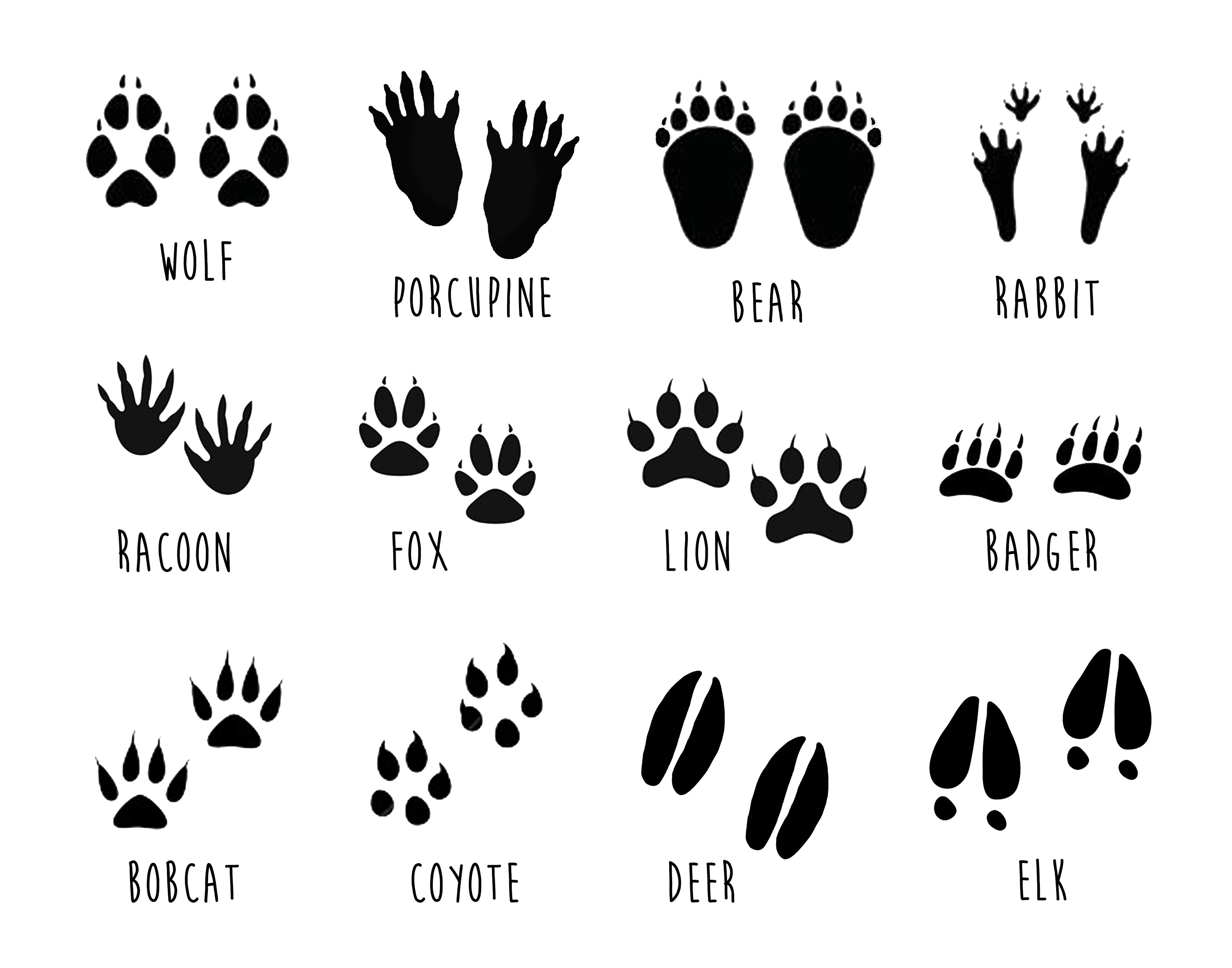 photo about Printable Animal Tracks titled Facts In excess of The Mountain Place house Animal footprints
