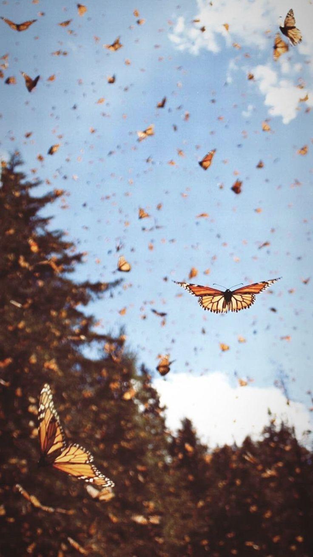 Mariposas monarca. # Naturaleza #Animales #Mariposas #Cielo
