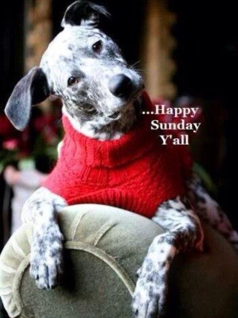 Everyday is sunday to your pet happy sunday quotes