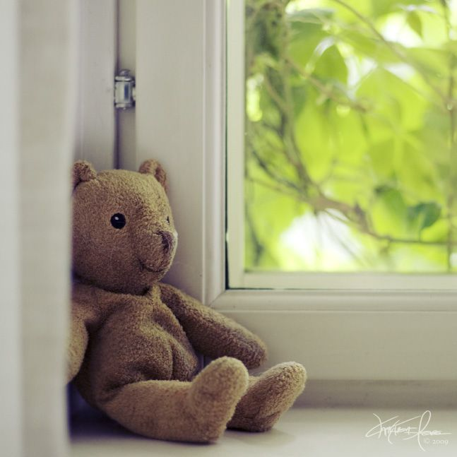 the bear by the window