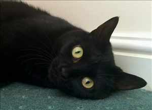 Who Said Black Cats Don T Photograph Well Beautiful Jet Has Been In Care For 8 9 Months And Is Desperate For Her Forever Home