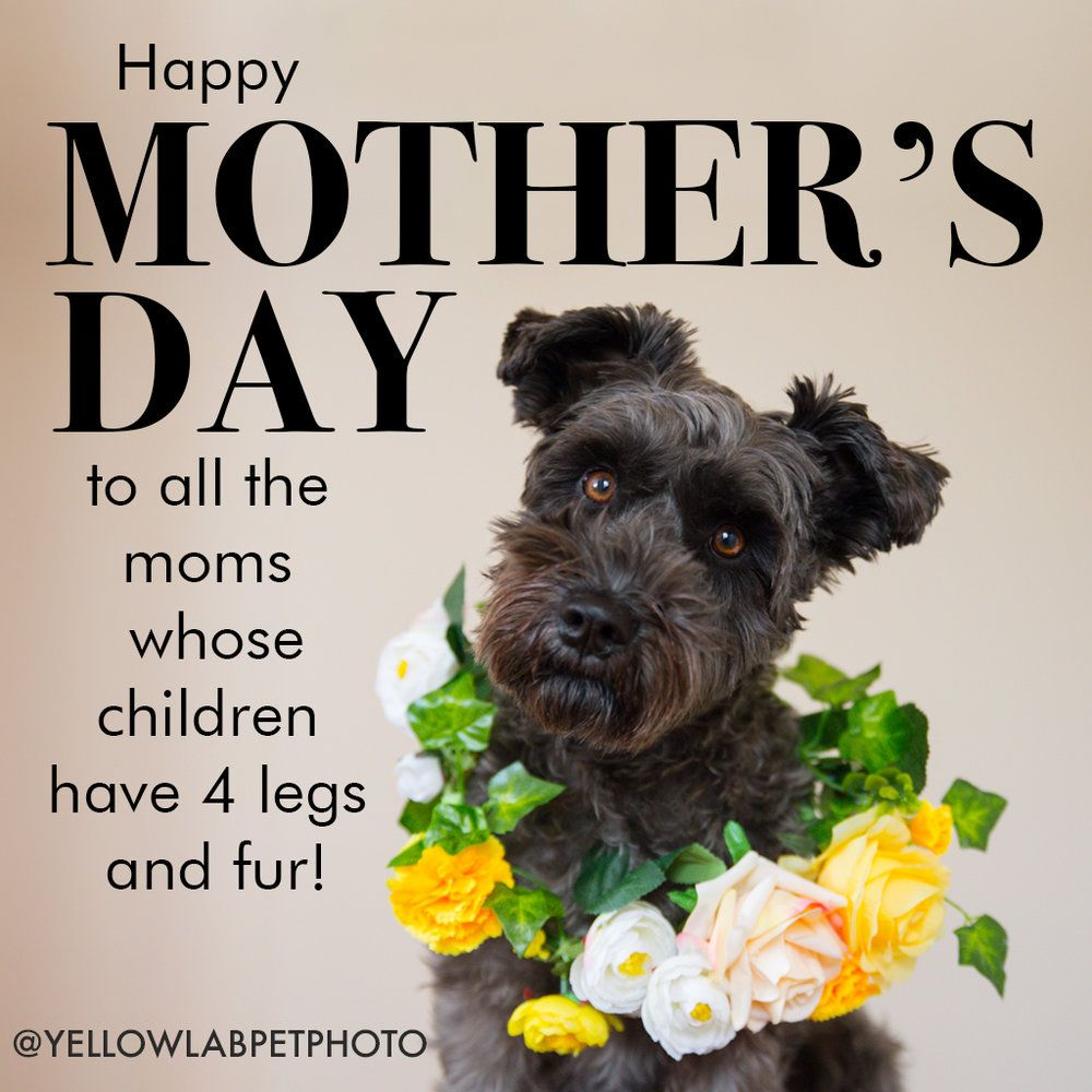 Happy Mother S Day To Fur Moms Yellow Lab Pet Photographer Dog Mothers Day Fur Baby Mom Dog Mom Quotes