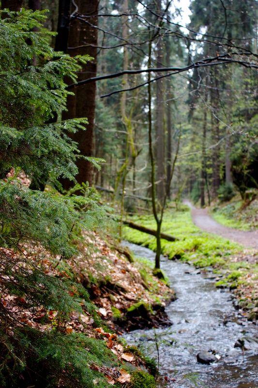 Stream in Amselgrund, Saxon Switzerland in Eastern Germany