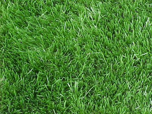 Keep Off The Grass 5 Alternatives To A Traditional Lawn Grass Alternative Artificial Grass Rug Shade Grass