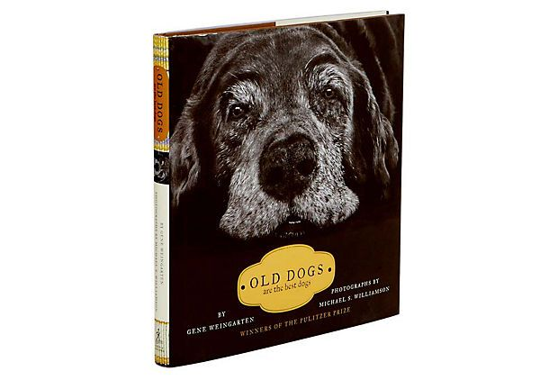 A tribute to ever dog that has made it that far in life. they share their wisdomw/humans