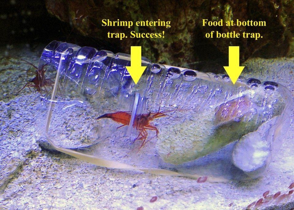 how to make a shrimp trap