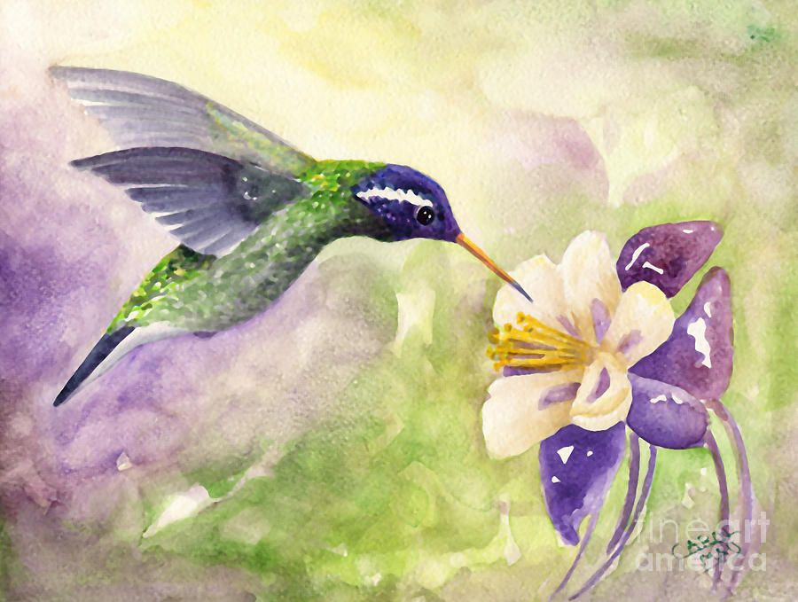 Hummingbird Flowers | White-eared Hummingbird Painting ...