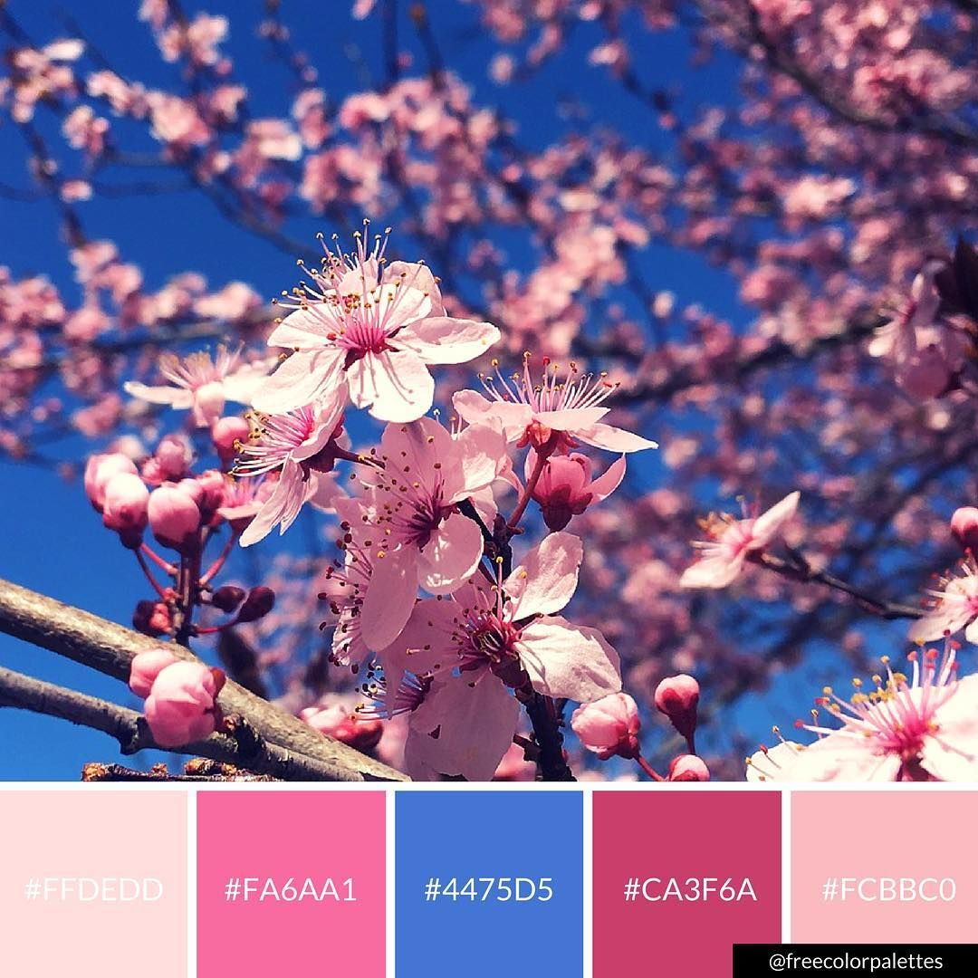 Japanese Cherry Blossom Pink And Blue Color Palette Inspiration
