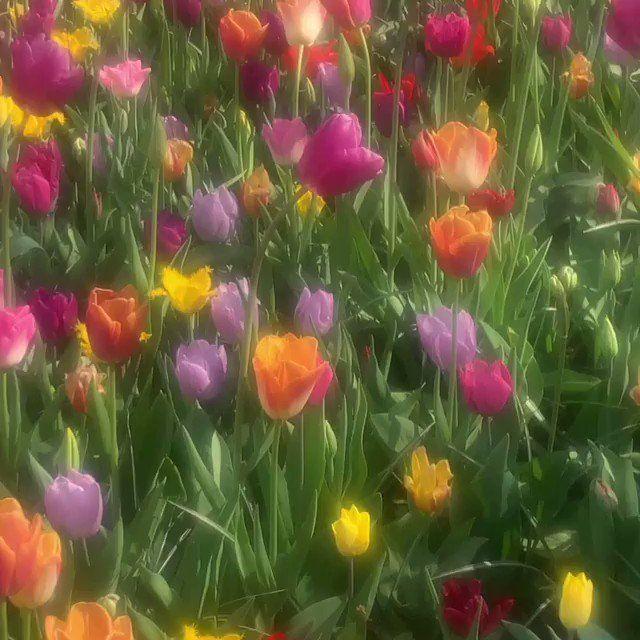 Primitive Tulip Pots