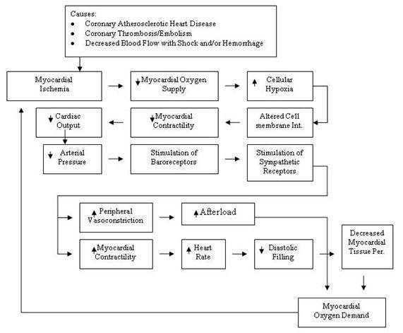 Pathophysiology Of Myocardial Infarction I