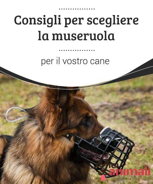 Consigli per scegliere la museruola per il vostro cane  Scegliere la museruola sarà la chiave per il benessere del cane e, soprattutto, per la sua sicurezza e per quella delle persone.
