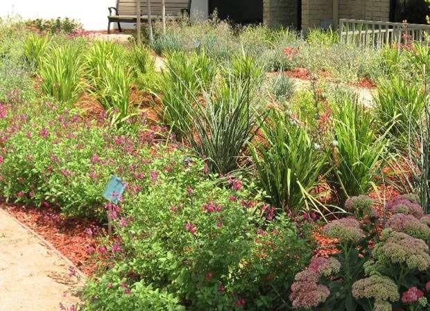 The City of Glenora, California, showcases drought-resistant gardens ...
