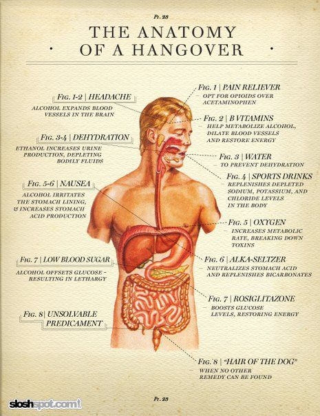 The Anatomy of a Hangover   Holiday: New Year's Eve   Anatomy