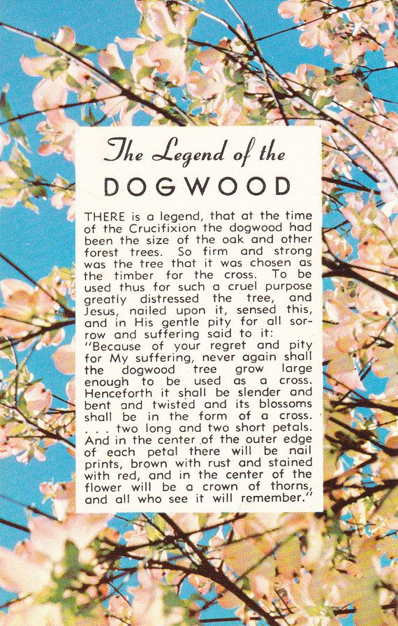 picture regarding Legend of the Dogwood Tree Printable known as The Legend of the Dogwood 1950s Basic by means of EphemeraObscura