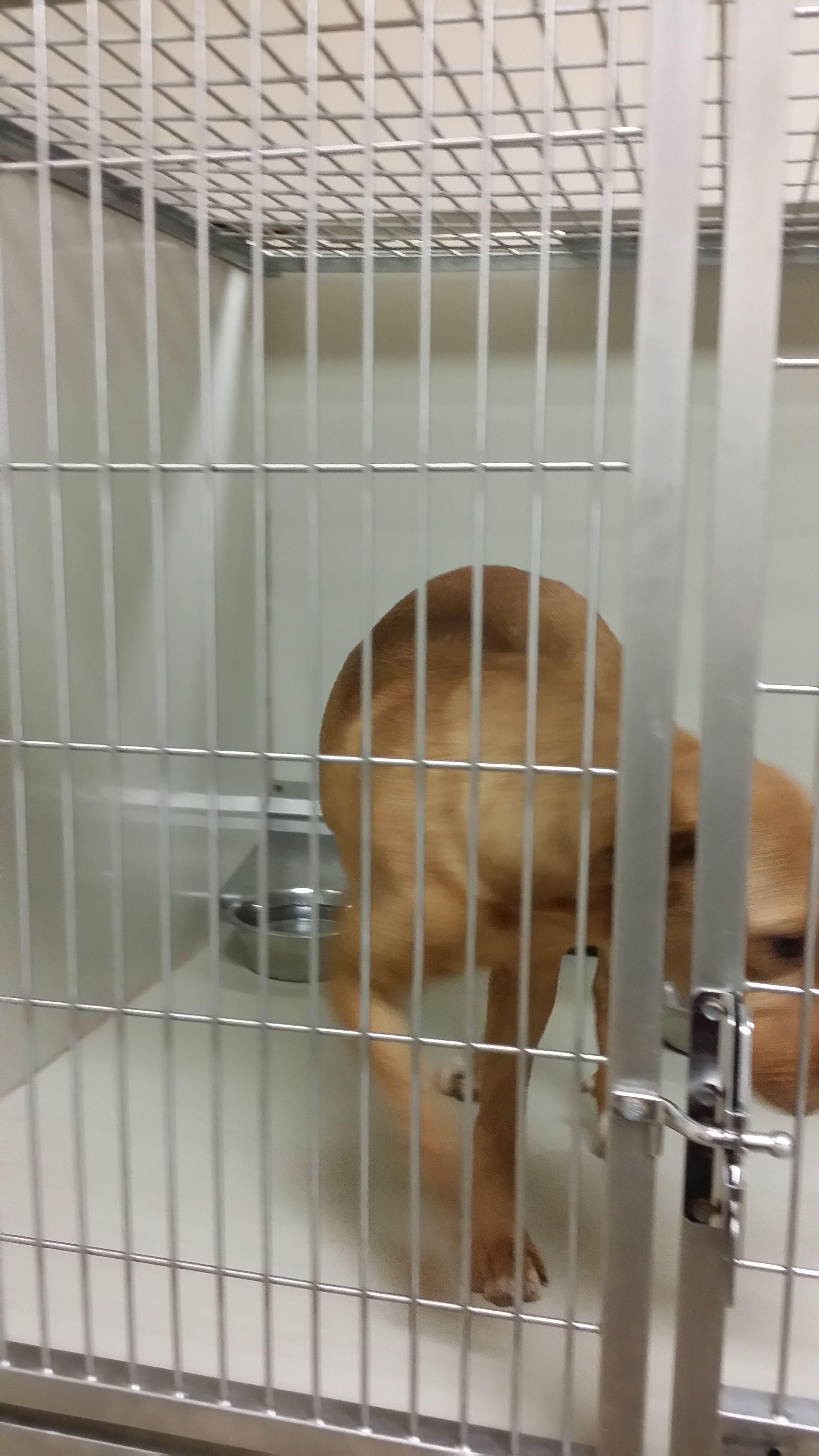Pet Card Poodle Mix Puppies California Dog Dogs