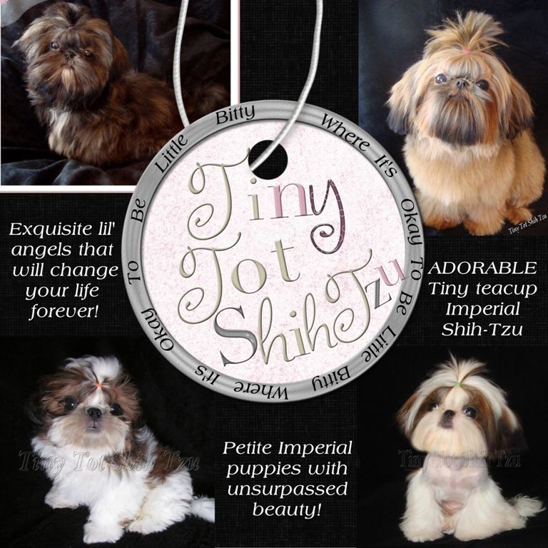 Iowa Chinese Imperial Shihtzu Puppies And Teacup Shih Tzu Puppies
