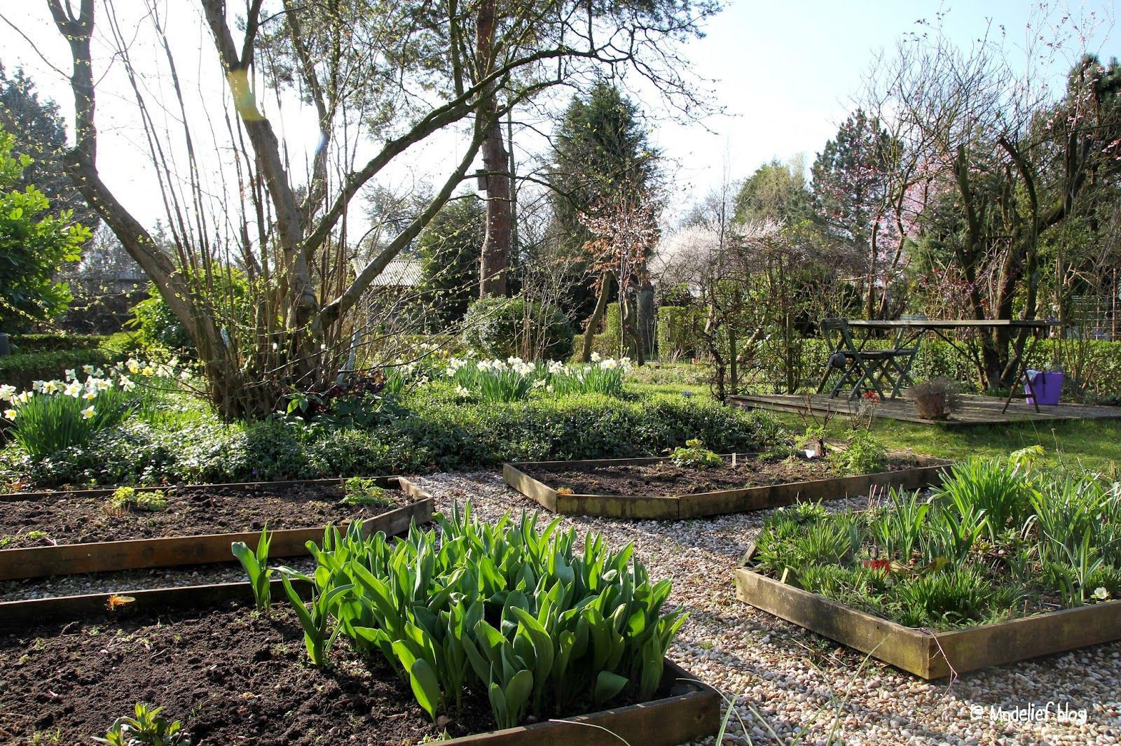 Romantic garden with raised beds in early Spring Vintage