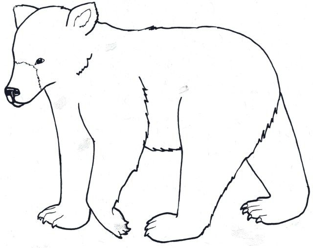 21 Wonderful Image Of Bear Coloring Pages Adult Coloring Pages