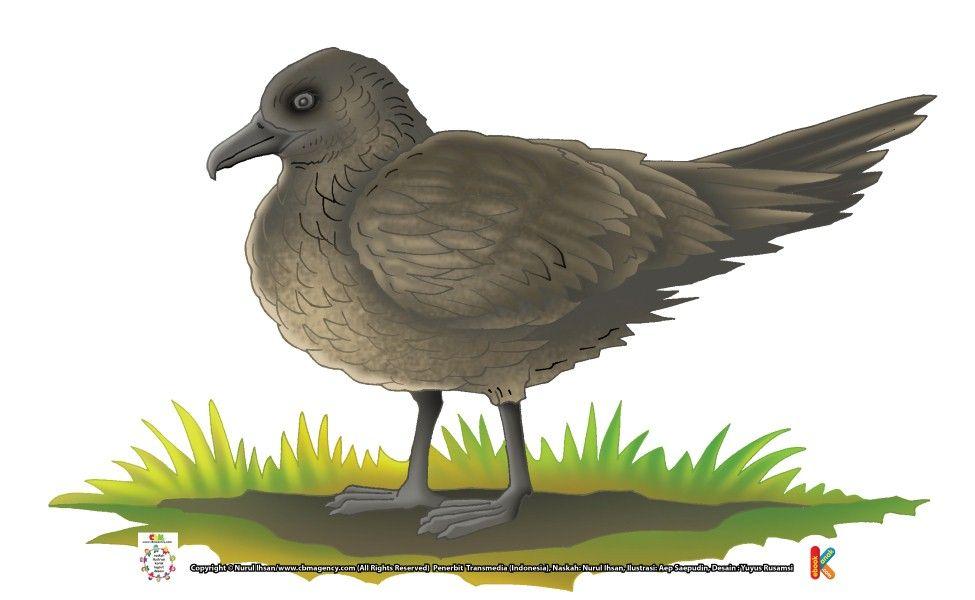 Skua Si Burung Pencuri Makanan Burung Makanan
