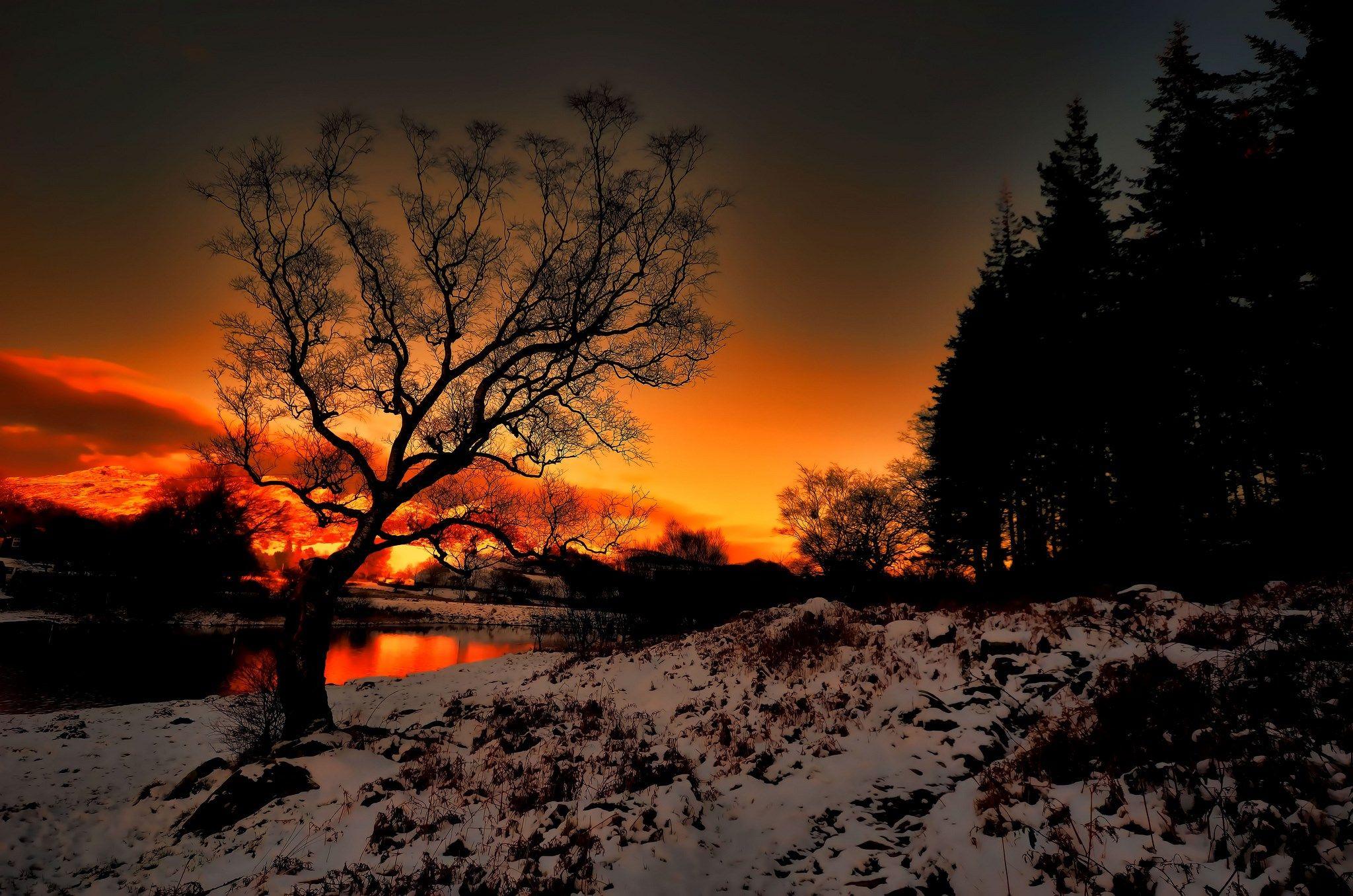 hd wallpaper tree Winter sunset, Sunset, Sunset wallpaper