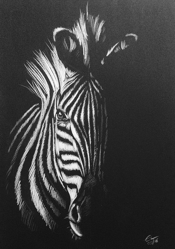 Zebra white pencil drawing on black paper zebra art whiteonblack