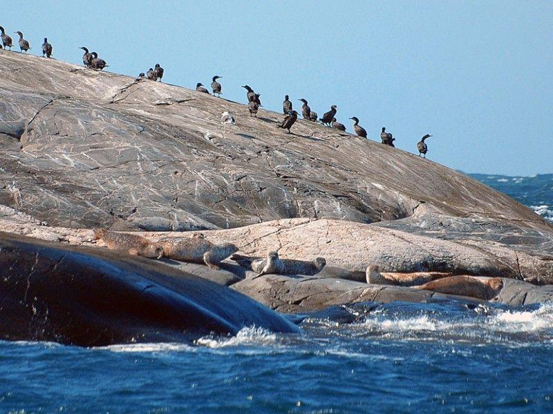 Kosterhavet Marine National Park, West Sweden