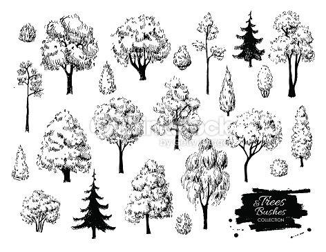 Resultado De Imagen Para Pino Dibujo A Lapiz Tree Sketches How To Draw Hands Architectural Trees