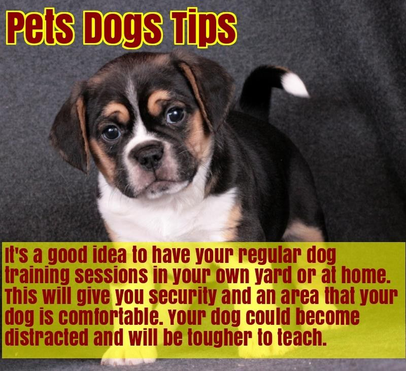 Check Out These Simple Dog Training Ideas Dog Training Easiest