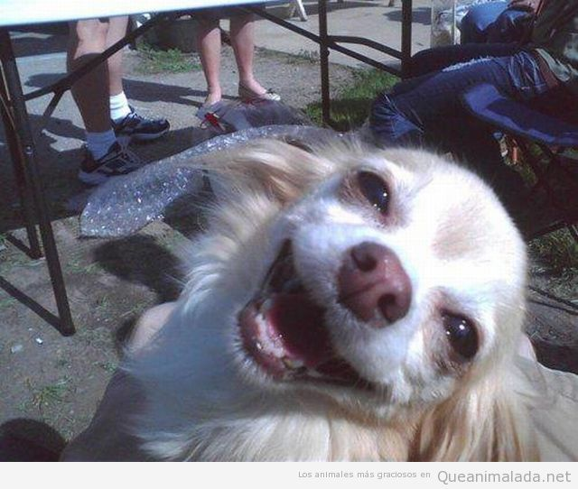 Smile Memes Perros Fotos Divertidas De Animales Animales