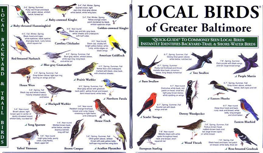 Be A Master Bird Watcher With This Helpful Guide Now You Can Stop Pretending Backyard Birds Bird Identification Florida