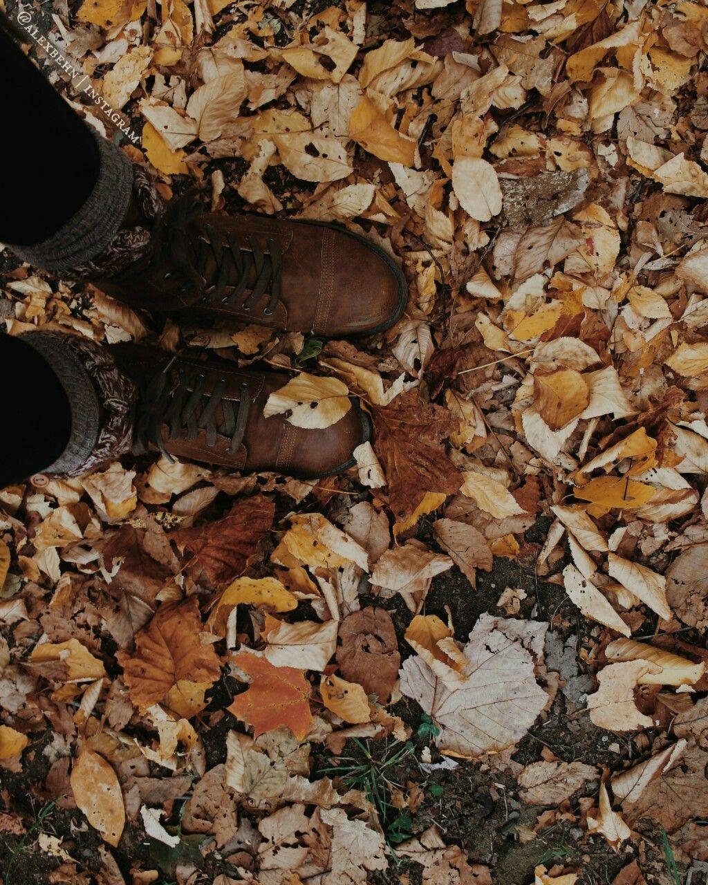 Autumng Asthetics: Autumn Aesthetic