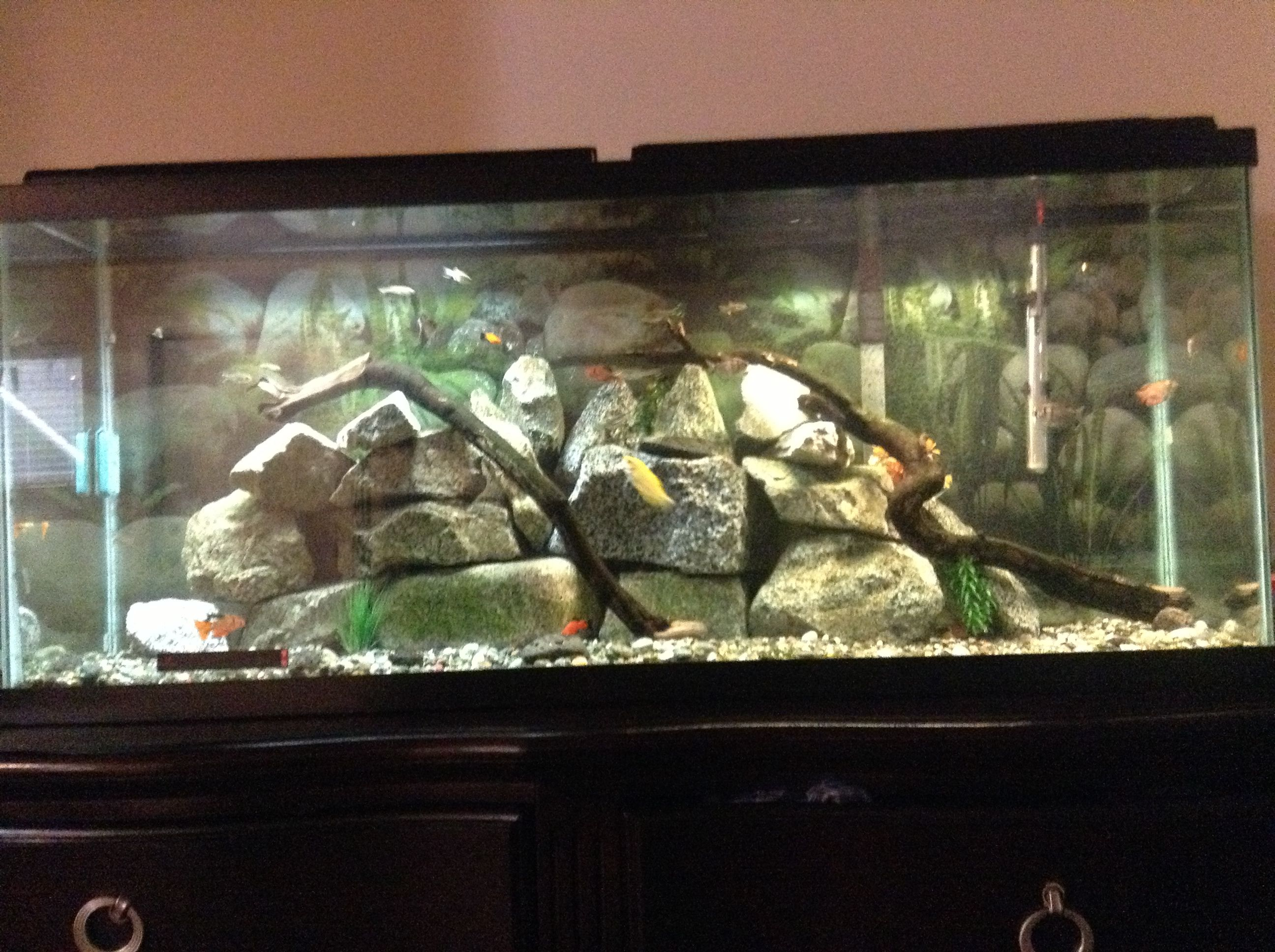 This is my fish tank 27 fish it s 55 gallons Pets Pinterest