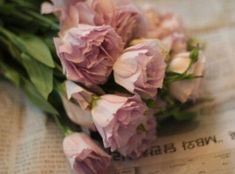리시안셔스(Lisianthus)  -우리나라 이름 : 도라지꽃  -꽃말 : 변함없는 사랑, 우아함, 아름다움, 상냥함, 모성애와 행복  -특징 : 은은한 향기/꽃말 변함없는 사랑으로 부케에 많이 쓰임