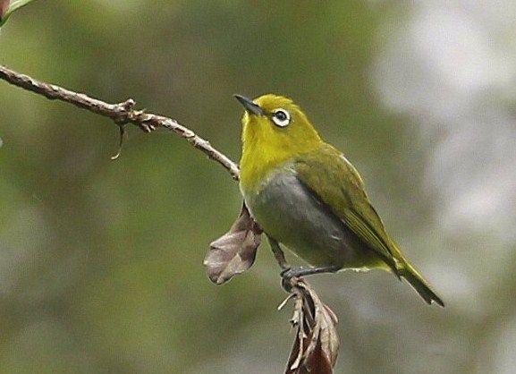 Pin Di Amazing Bird