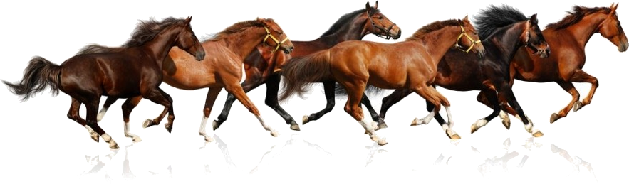 Caballos Png Buscar Con Google Horses Horse Wall Art Canvases Horse Painting