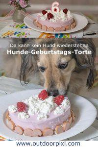 Hunde Geburtstags Torten Hunde Torte Hundekuchen Rezepte Hunde