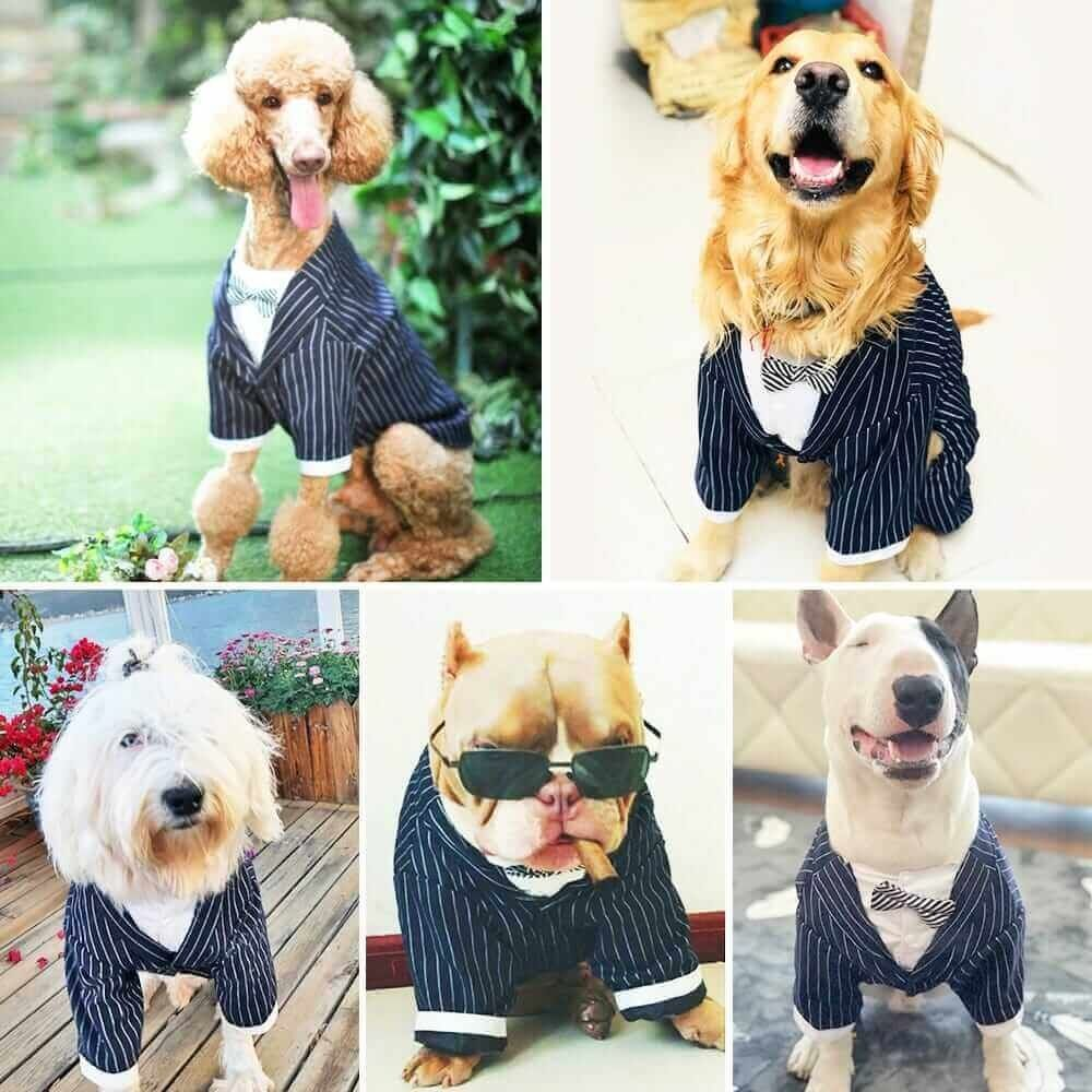 Handsome Large Dog Pet Tuxedo Suit for Big Dog Striped Bow Tie Suit Golden Husky Clothes Dog Costume  Price: 38.99 & FREE Shipping  #pets
