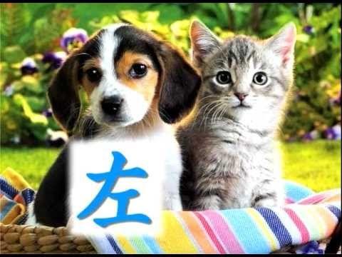 Mandarin Kids Songs Kitten