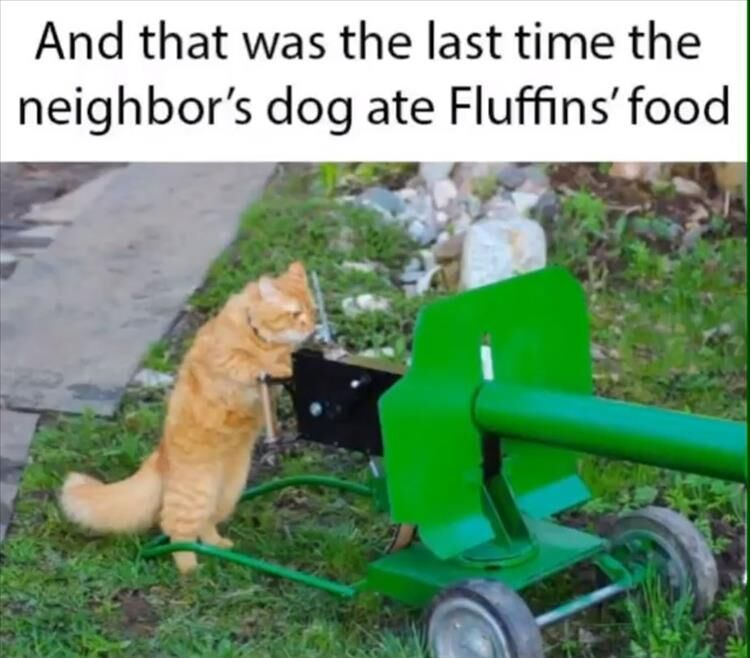 24 Funny Animal Pictures In 2020 Funny Animals Funny Animal Memes Animal Memes