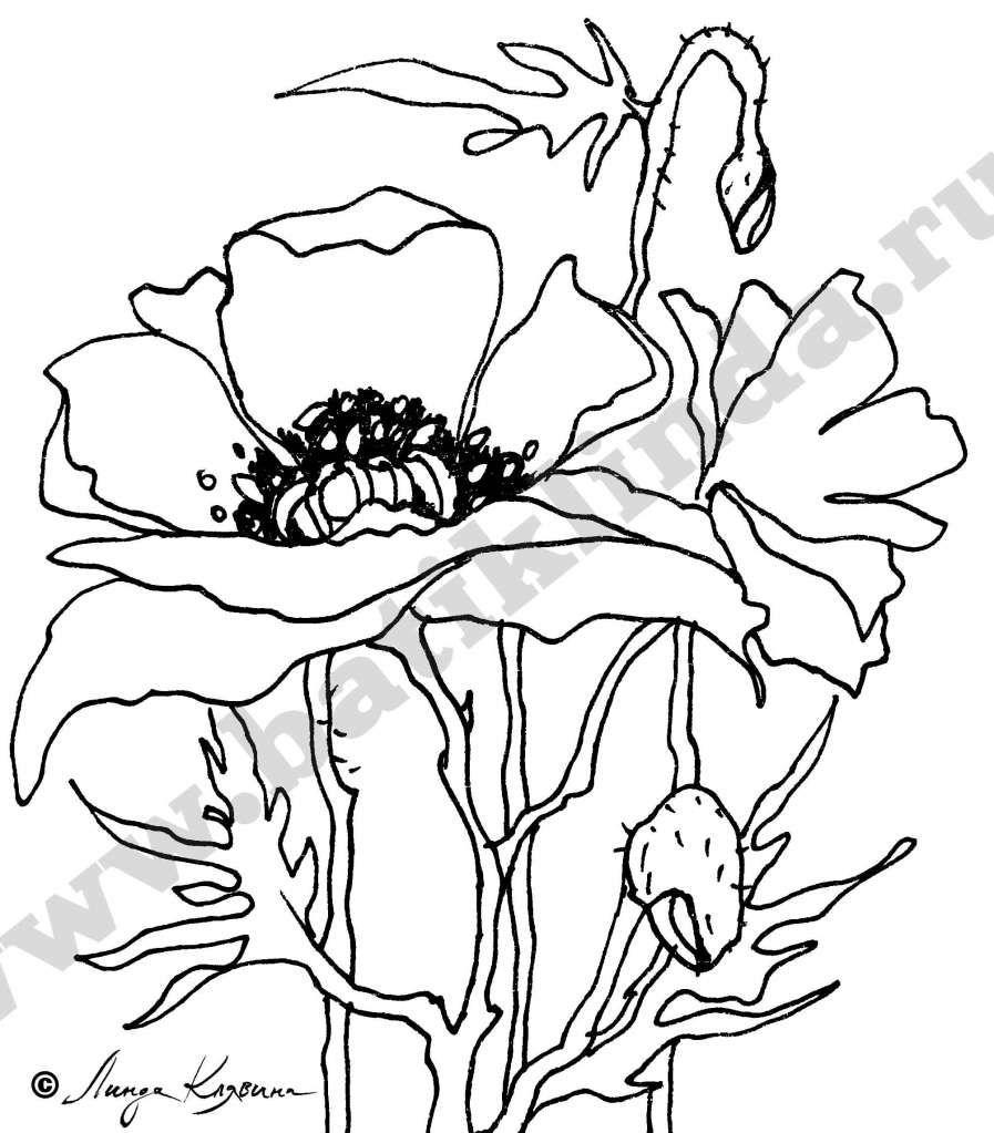Трафарет цветка мак