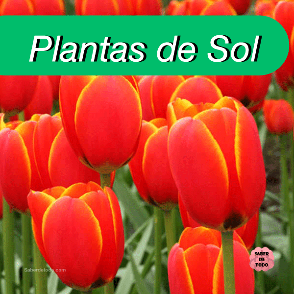Plantas De Medio Sol