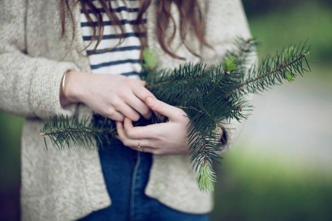 Edible Conifers - Jen Vitale