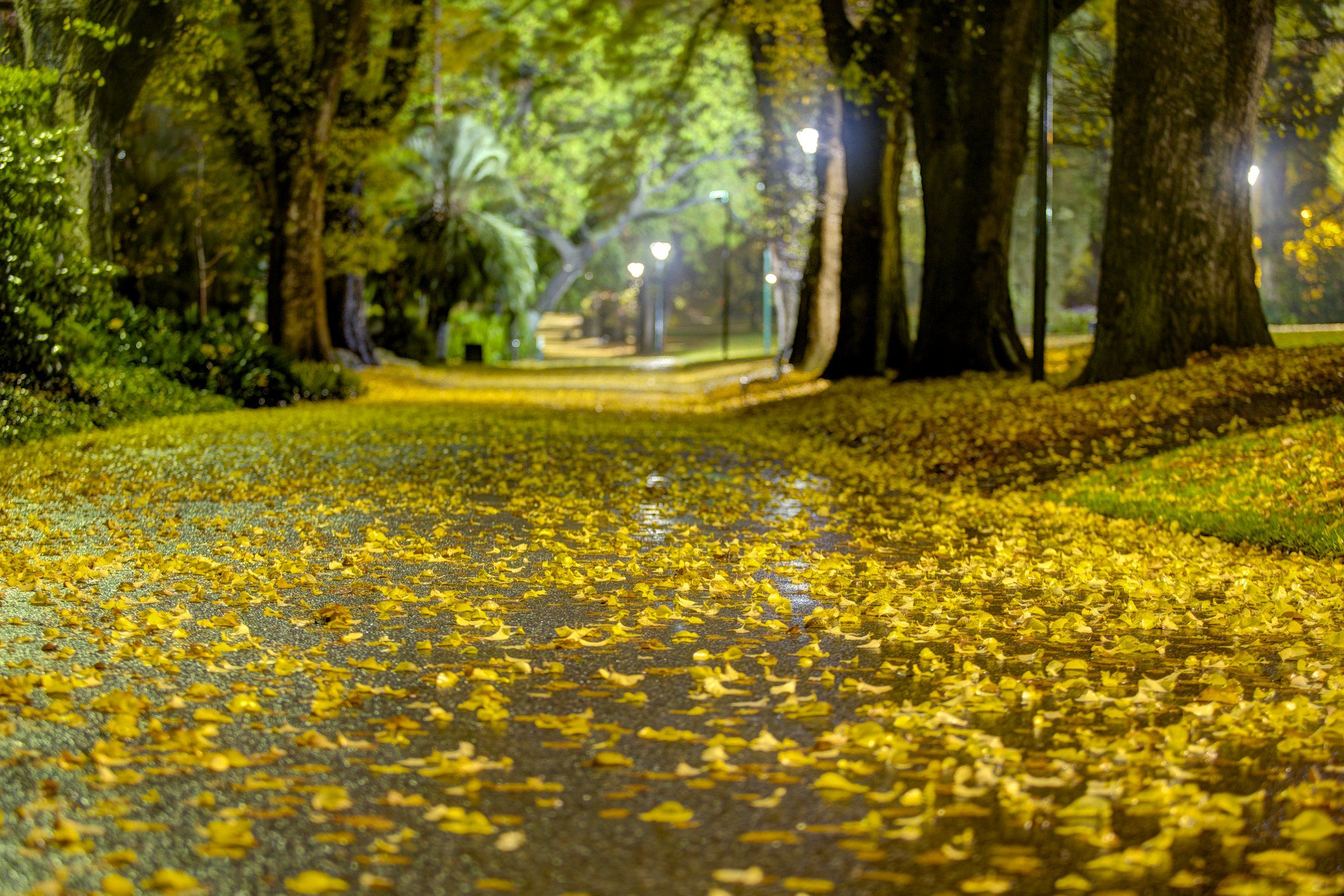 winter in fitzroy gardens melbourne steven wright foto