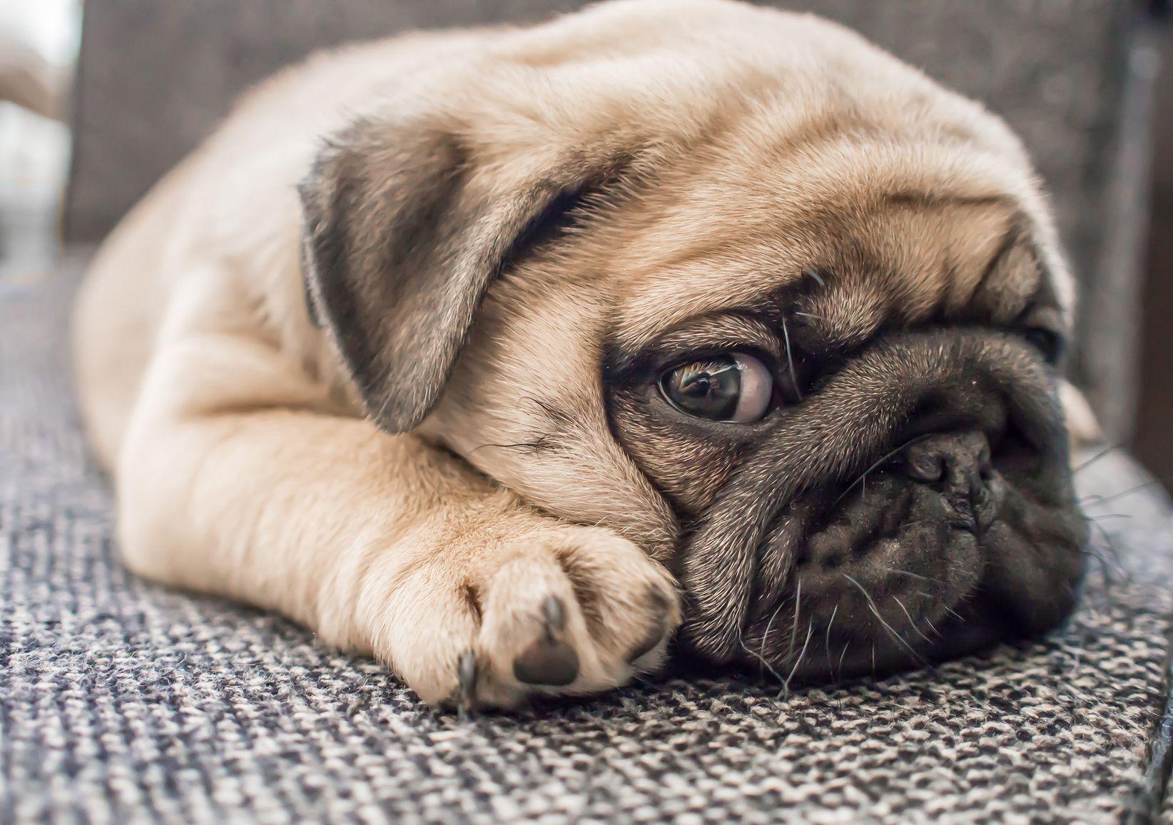 Asiantuntija:+Koiria+ei+kannata+halailla,+koska+ne+eivät+pidä+siitä