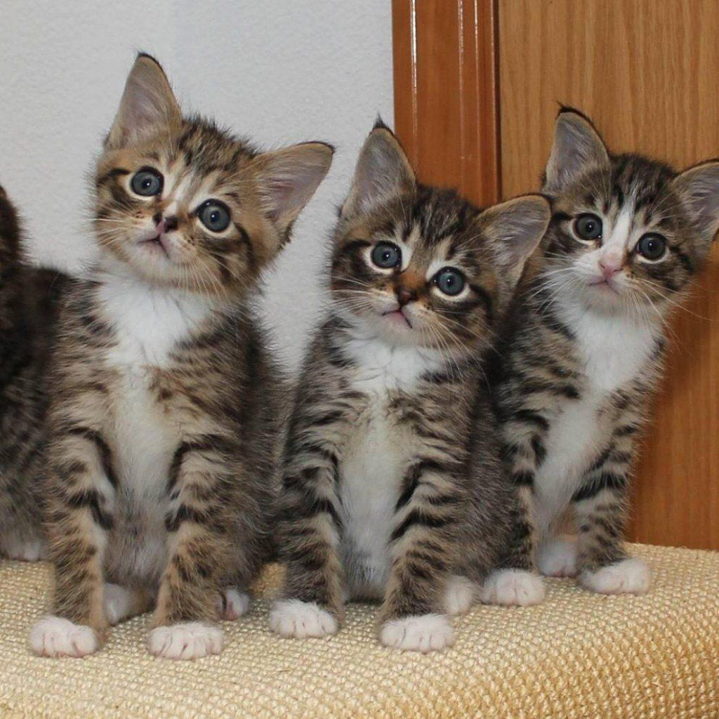 Cats Kittens Catlife Cute Cats Photos Kittens Cutest Cute Cats And Dogs