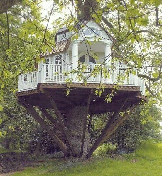 Dream tree house