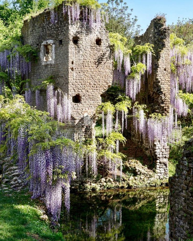 Wisteria Traveling By Yourself Italian Garden Fire Pit Area