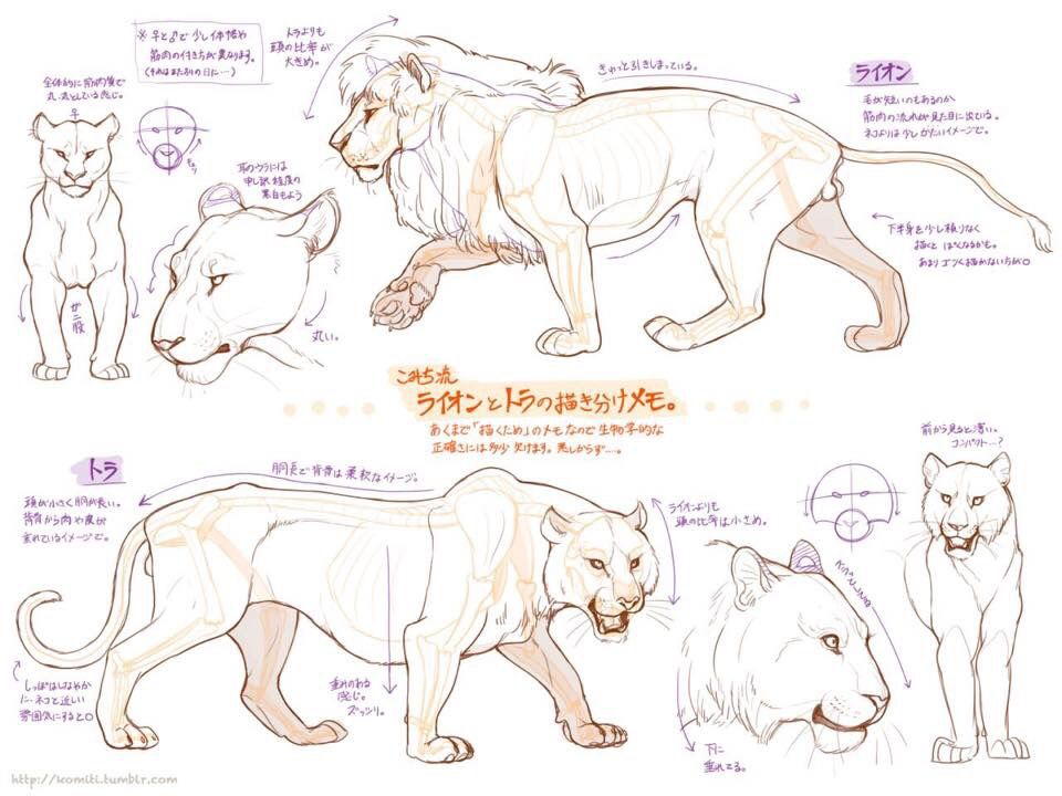 How To Draw Lions And Cougars Mountain Lions With Images