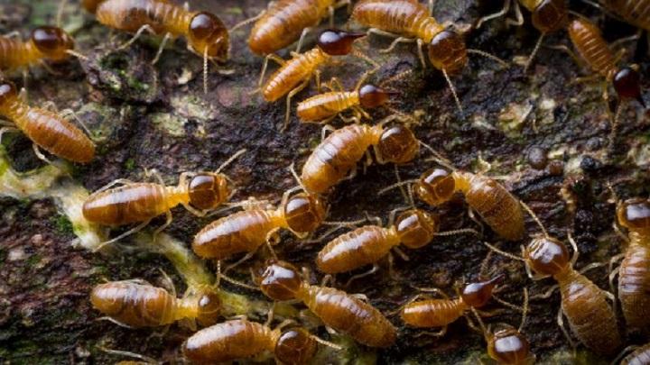 How do termites survive? in 2020 Termites, Plant fibres